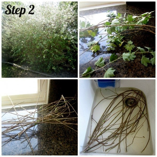 How to make aRecycled Book Page Butterfly Wreath out of pages from a damaged book and branches.