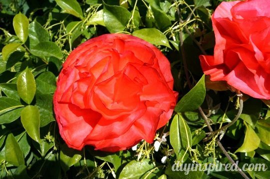 Coffee Filter Roses (1) (540x359)