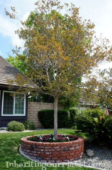 family-gardening-1-372x560