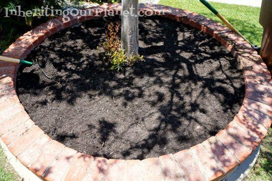 gardening-with-kids-7-560x372