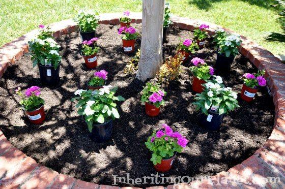 gardening-with-kids-8-560x372