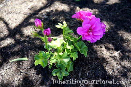 gardening-with-kids-9-560x372