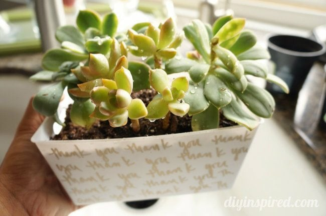 Succulent Hostess Gift (2)