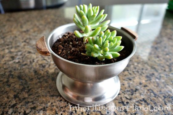 Upcycled Thrift Store Succulent Pot