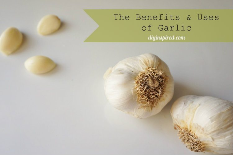 The Benefits and Uses of Garlic