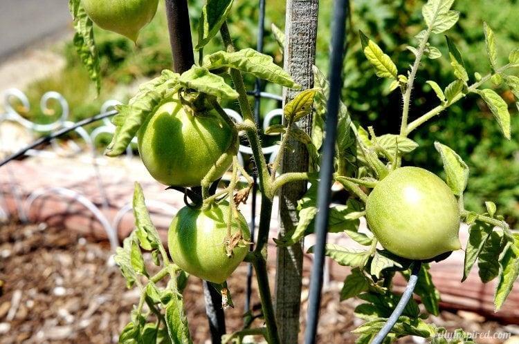 Tips for Growing an Environmentally Friendly Garden