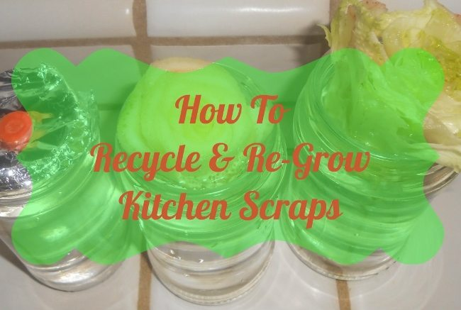 How to Recycle and Regrow Your Kitchen Scraps