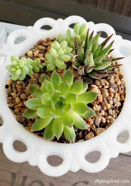 Planting a Succulent Garden Thrift Store Vases
