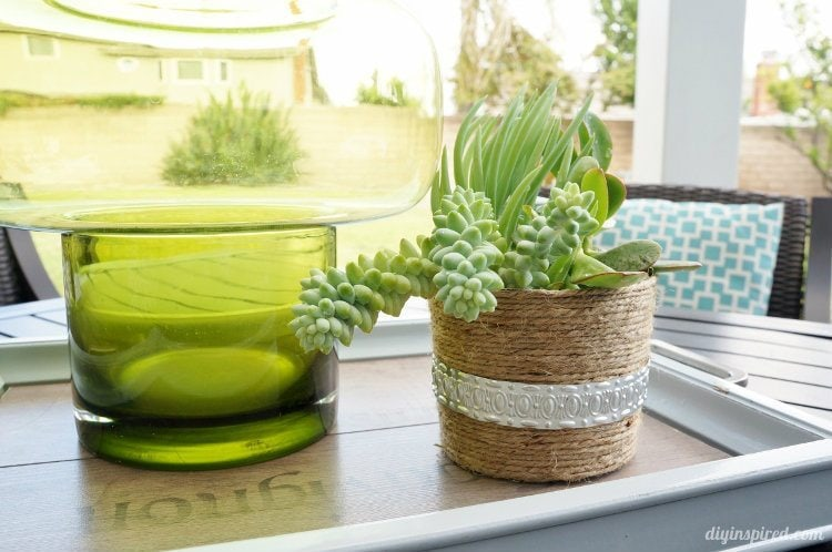 Repurposed Yoghurt Container Turned Succulent Pot