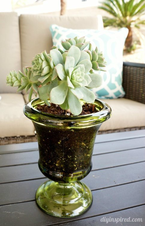 Succulents in Thrift Store Pots