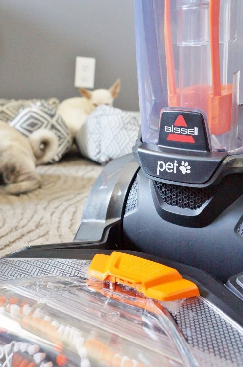 Deep Cleaning your Carpet When You Have Pets- DIY Inspired