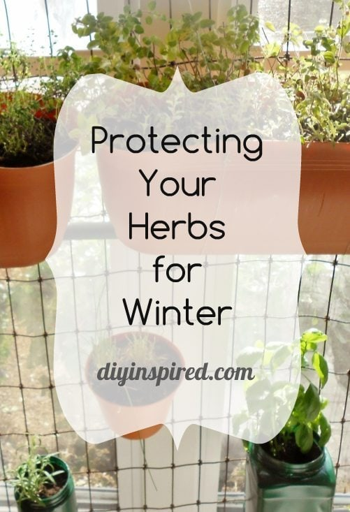 Protecting Your Herbs for Winter DIY Inspired