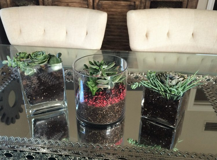 Planting Succulents DIY Inspired