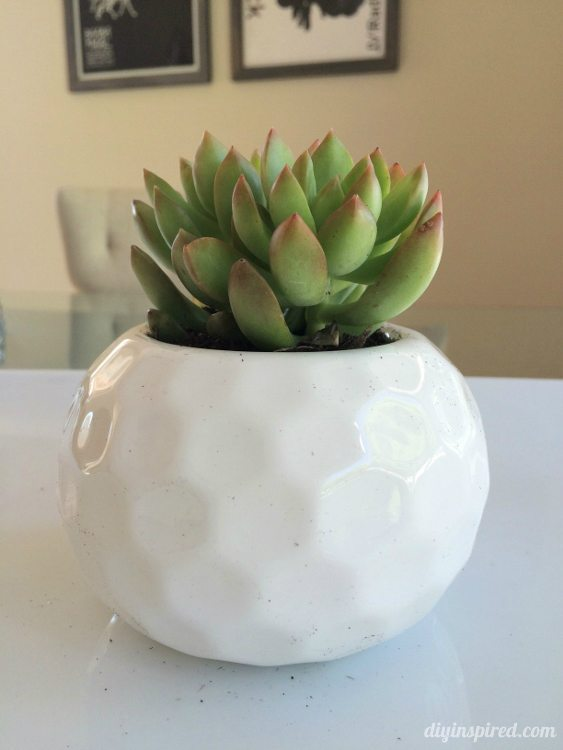 Mini Succulents in White Vase