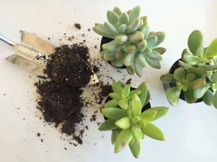 Planting Mini Succulents