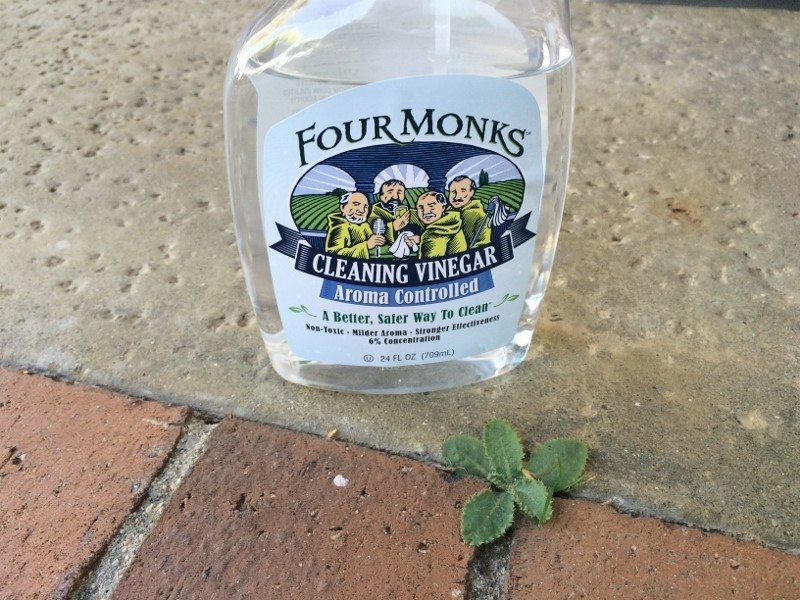 Use Vinegar to Control Weeds