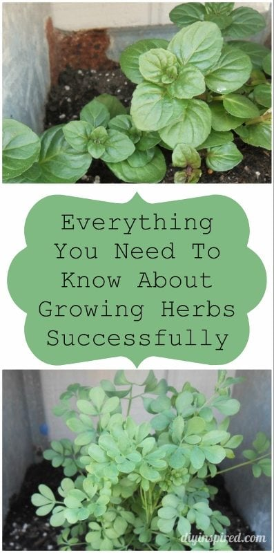 Everything You Need to Know about Growing Herbs Successfully -DIY Inspired