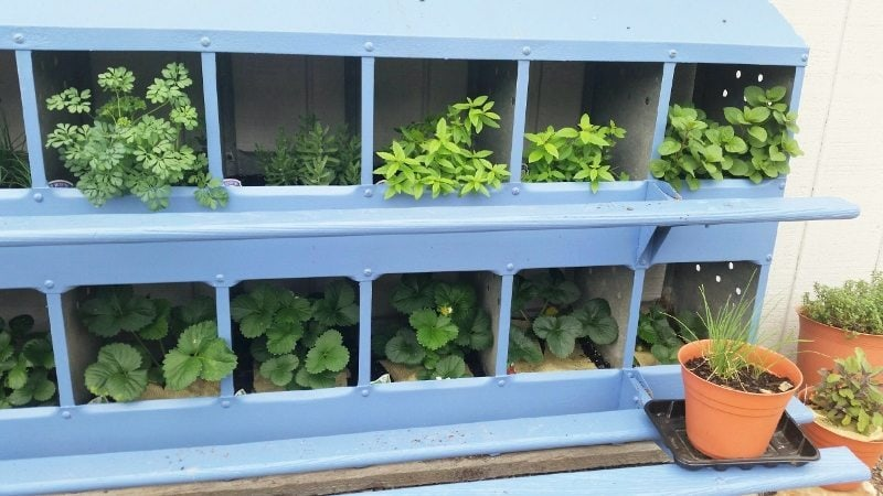 Repurposed Herb Garden