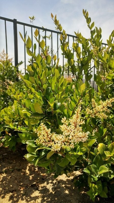 Outdoor Space - Shrubs