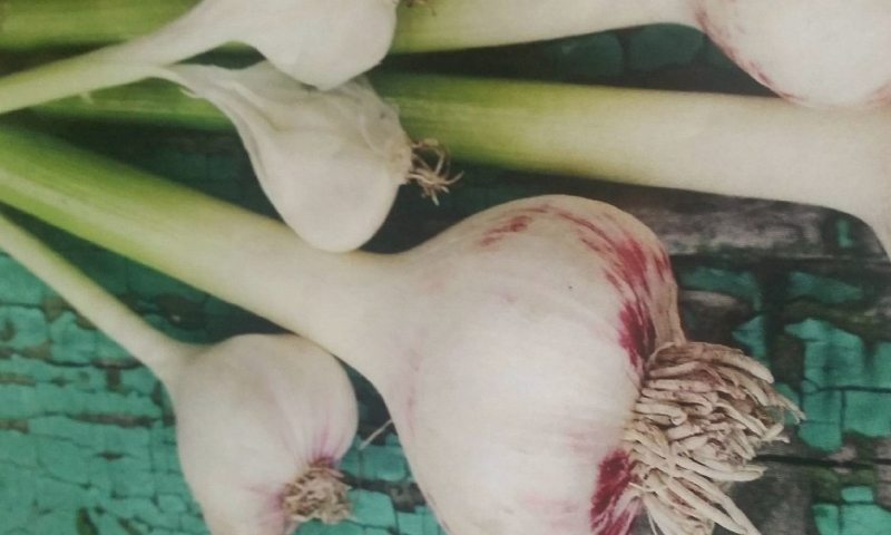 Everything You Need to Know to Grow Your Own Garlic