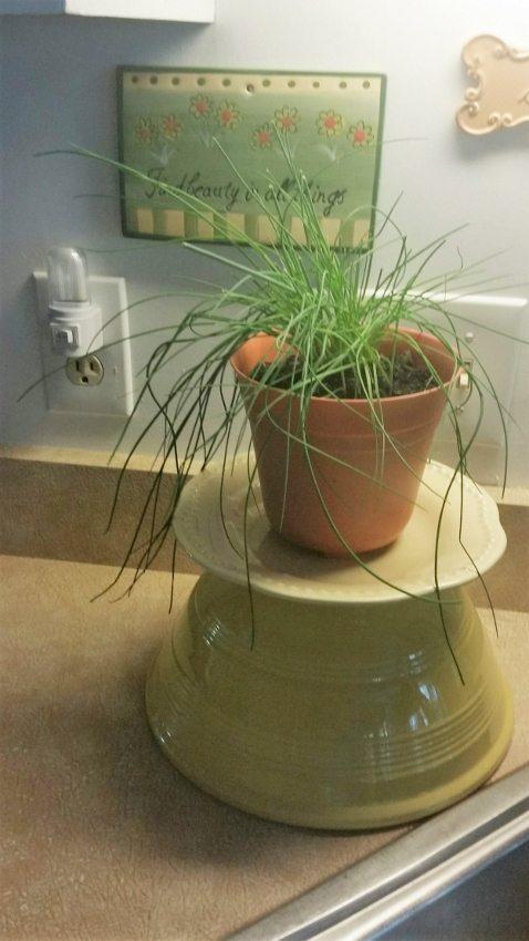 Growing Herbs Indoors (3)