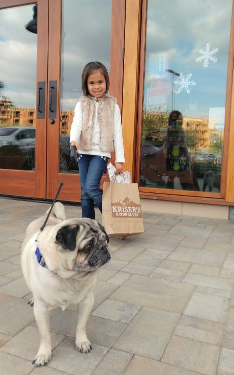 holiday-pet-essentials-with-krisers-mia-and-harley