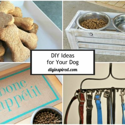 DIY Ideas for Your Dog