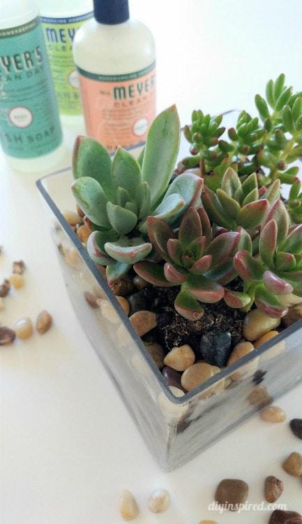 Diy Mini Succulent Garden Diy Inspired