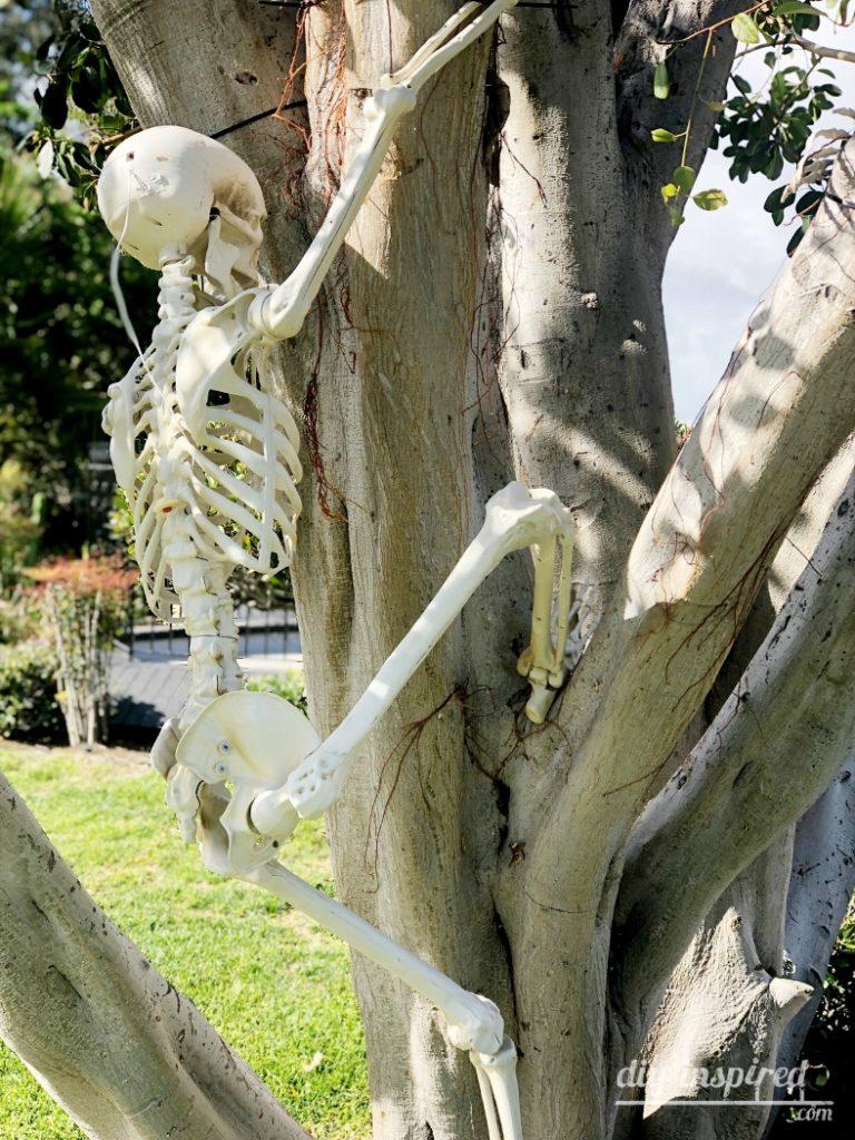 Best Halloween Skeletons