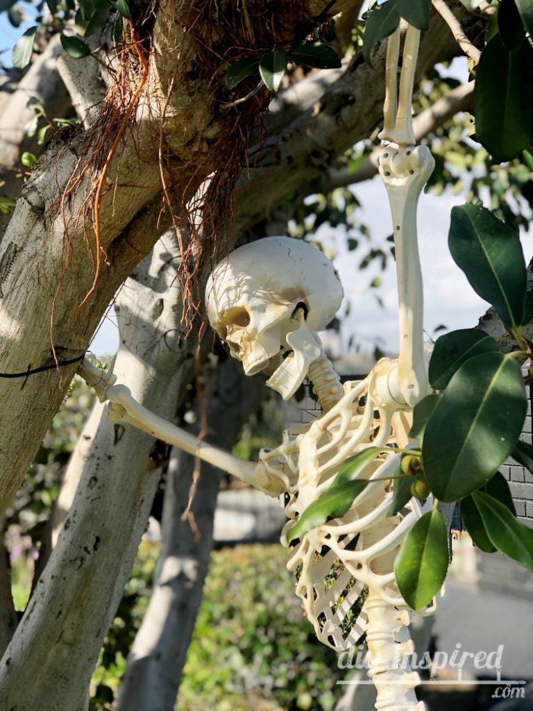 Skeleton Posing Ideas